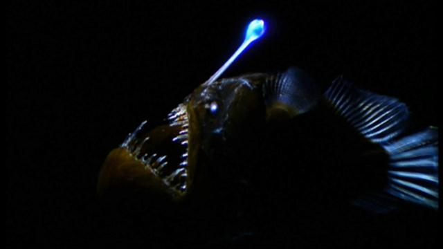 Bioluminescence experiment for kids studying marine biology, fun glow in the dark experiment www.anyone4science.com