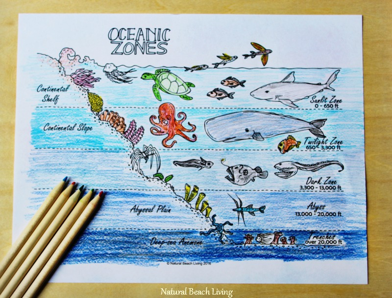 Oceanography For Kids Activities
